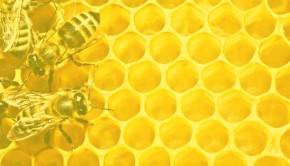 Top 5 bumble bee knitting patterns